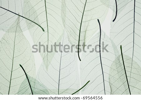 Skeletons of the fallen autumn leaves - stock photo