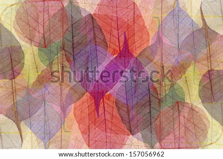 Skeletons of the fallen-down autumn leaves - stock photo