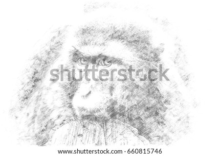 Sketch - A monkey looking sad into the camera