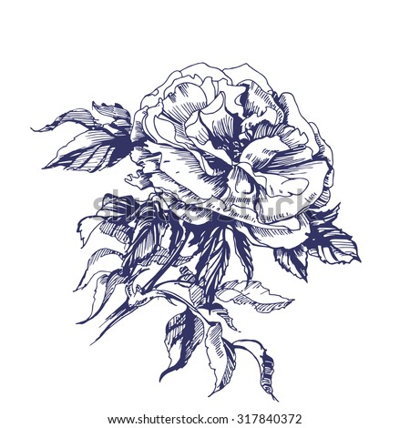Sketch blooming branch of wild rose. Element for your design.