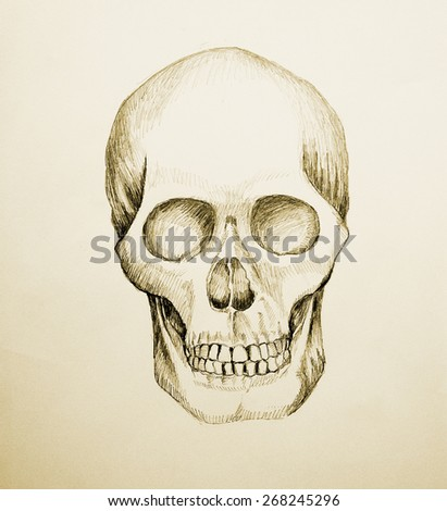 Sketch illustration of a human skull, raster version with tracing path
