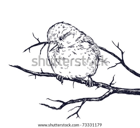 Sketch illustration of sparrow on branch - stock photo