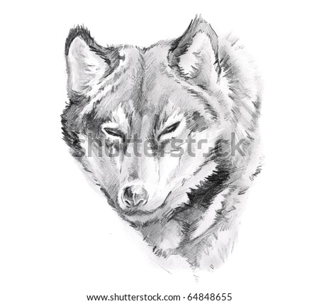 Sketch of tattoo art, wolf - stock photo
