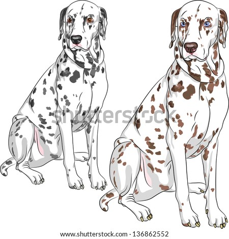 Labrador Puppy Sitting Drawing By Hand Stock Vector ...