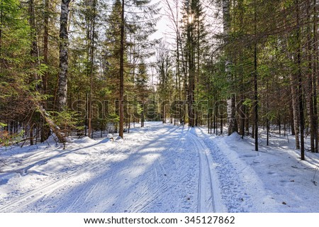 Ski in the winter woods. The sun rays make their way through the dense forest - stock photo