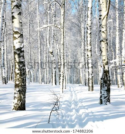 Ski run in winter forest - stock photo
