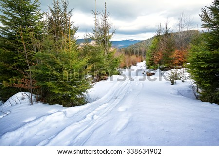 Ski track in snow among fir trees in mountains - stock photo