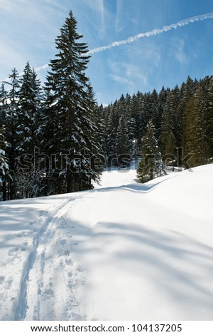 Ski trail in the winter forest