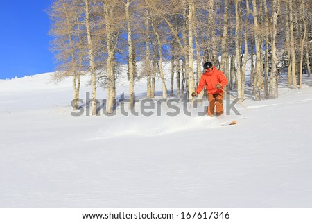 Skier in fresh powder snow with aspens in the background, Utah, USA. - stock photo