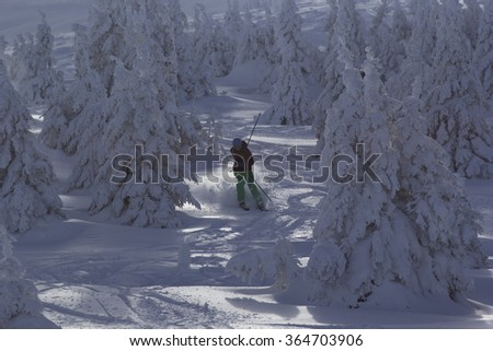 Skier rides among the pine trees. - stock photo