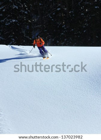 Skiing fresh powder with pines in the background. - stock photo