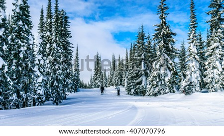 Skiing under blue skies and around snow covered trees at the village of Sun Peaks in the Shuswap Highlands of British Columbia, Canada - stock photo