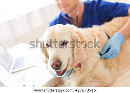 Skillful male vet is doing examination of puppy - stock photo