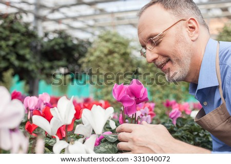 Skillful senior gardener is standing near plants in greenhouse. He is smelling flower with pleasure and smiling - stock photo