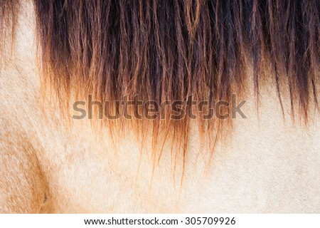 Skin and coat of the horse