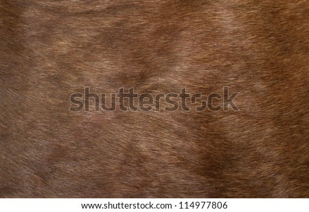 Skin of a deer, background - stock photo