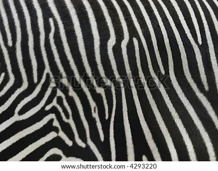 skin of a zebra is similar on barcode
