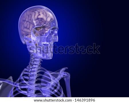 Skull and Brain - stock photo