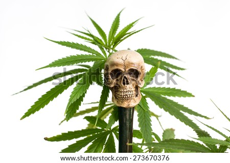 Skull and Green Cannabis Leaf - stock photo