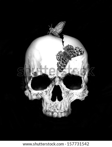 Skull and soul - stock photo