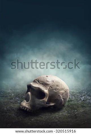 Skull in the foggy field - stock photo