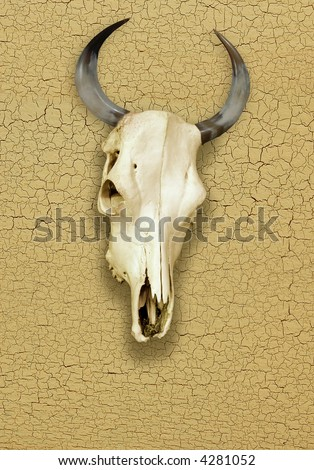 Skull of Bull over a Cracked Surface - stock photo