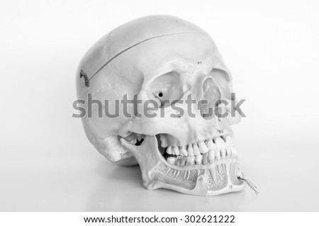 skull of human with old style