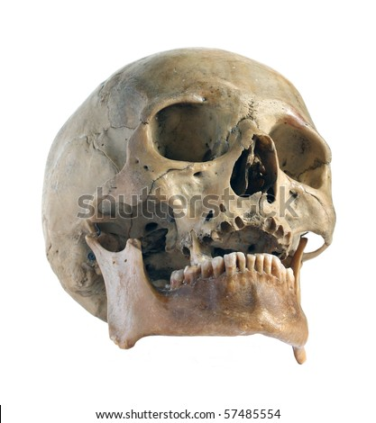 Skull of the person close-up. - stock photo