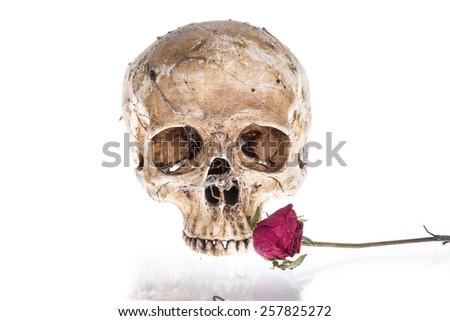Skull on a white background. - stock photo
