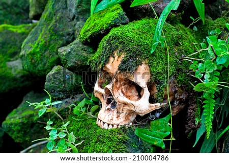 Skull on moss wall - stock photo