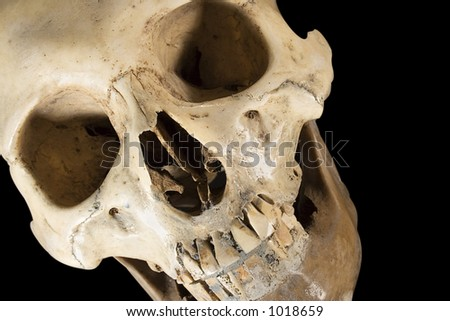 Skull w/Clipping Path (Diagonal Front View) - stock photo
