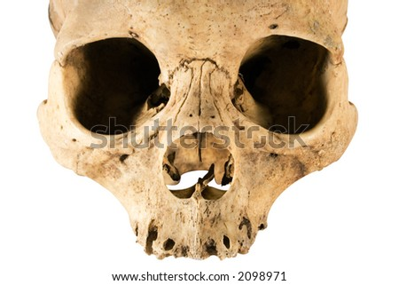 Skull w/Clipping Path (Front View) - stock photo