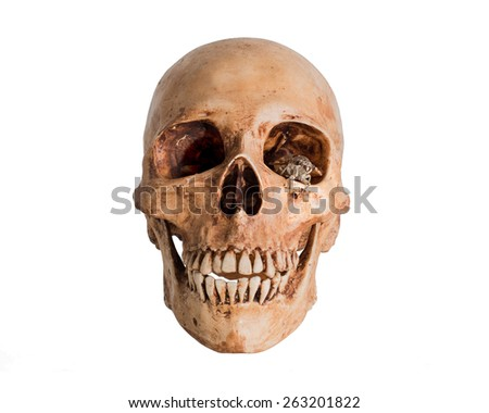 Skull with Cicada in left eye, Isolate on white background - stock photo