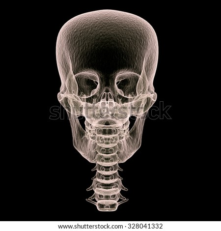 Skull x-ray front view, 3D render art and illustration. - stock photo