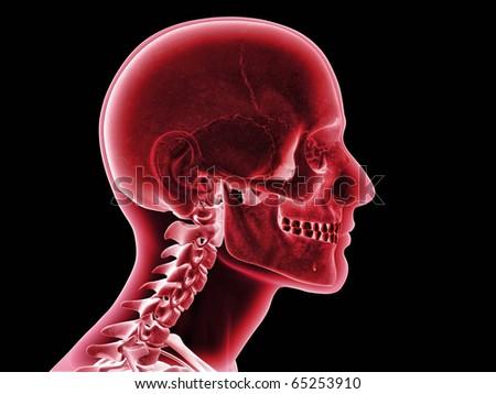 Skull XRay, Side View - stock photo