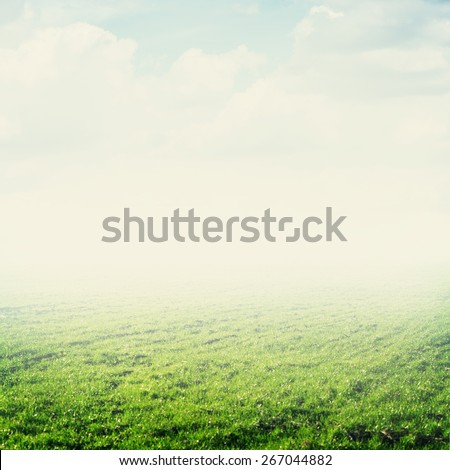 Sky and grass. Summer background - stock photo