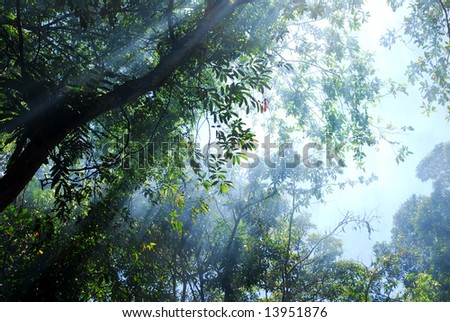 Sky and trees in the rain forrest. - stock photo