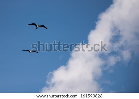 Sky background with clouds and birds flying.