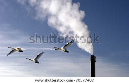 Sky blue chimney  with 3 swans flying by. - stock photo