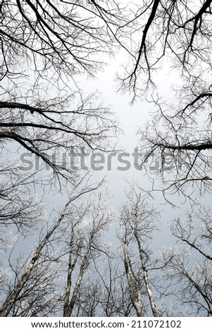 Sky seen from the forest floor