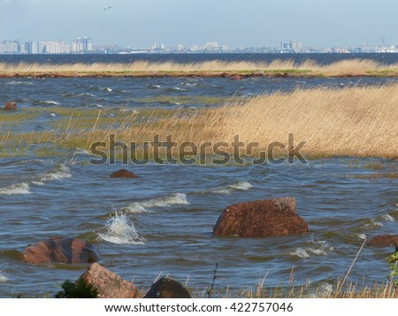 sky, stones, reed, tree, sea, city in are far  selective focus
