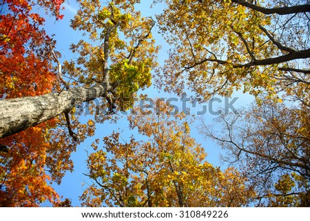 Sky through the autumn leaves - stock photo