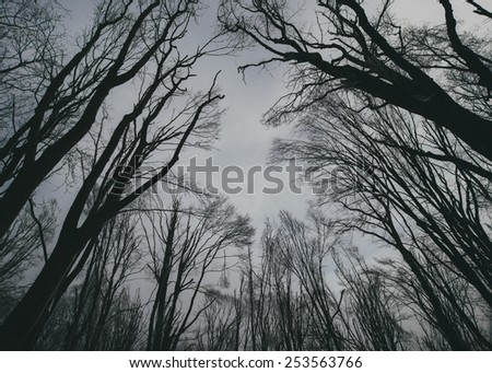 sky view from a forest - stock photo