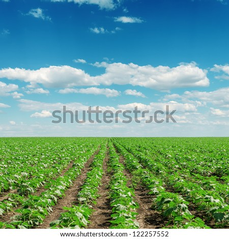 sky with clouds and field with little sunflowers - stock photo
