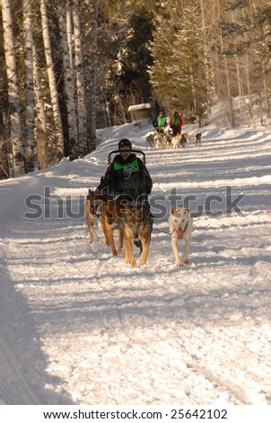 Sled Dog Races In Ashton Idaho - stock photo