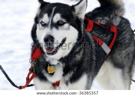 Sled dog racing in Wisconsin