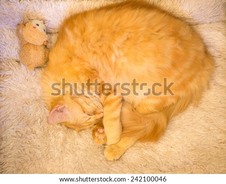 sleep cat - stock photo