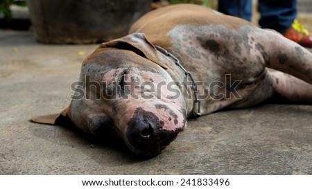 Sleep Dog - stock photo