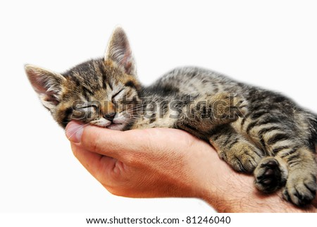 sleeping baby cat on hand - stock photo