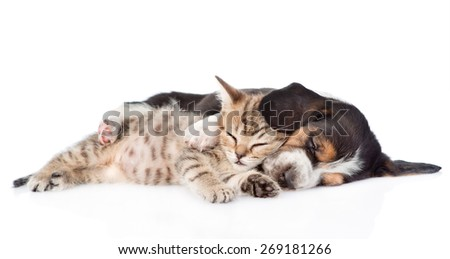 sleeping  basset hound puppy embracing tabby kitten. isolated on white background - stock photo